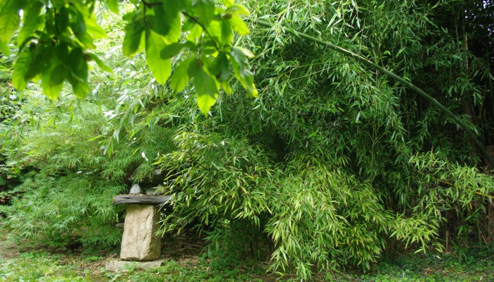 pays-alesia-seine-auxois-Abbaye-de-Flavigny-Fabrique-dAnis-Jardin-japonnais-mussy-la-fosse-02
