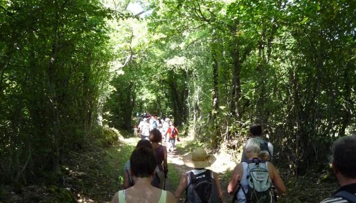 pays-alesia-seine-auxois-bourgogne-randonnee-chemins-route-foret-sentiers-sous-bois-marcheurs