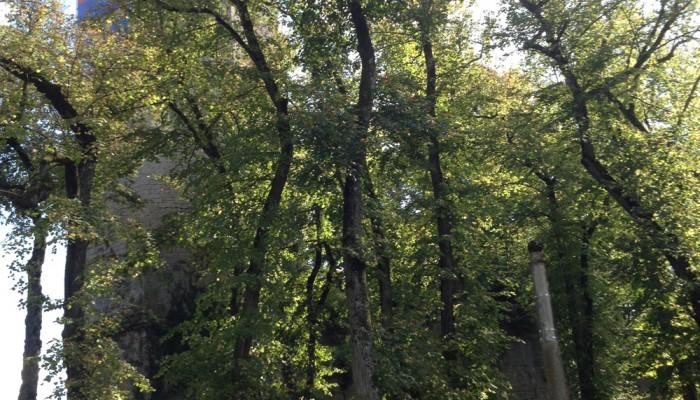 pays-alesia-seine-auxois-montbard-tour-de-aubespin-parc-buffon-calvaire